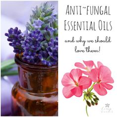 13 Anti~fungal Necessities & Why We Should Love Them