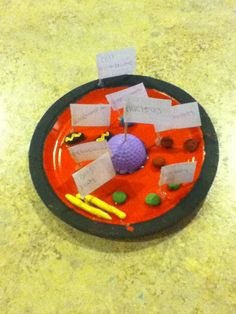 animal cell project ap bio by airbournevirus on DeviantArt