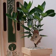 Gift Trees : enduring  eco. growing gift
