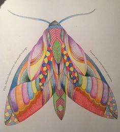 Completed One Of The Moths From Millie Marotta Animal Kingdom Colouring Book Milliemarotta Animalkingdom