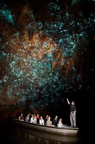 New Zealand's world-famous Glowworms tourist attraction at Waitomo Caves. A spell binding sight Waitomo Glow worm caves are truly a unique experience. Book now. Glowworm Caves New Zealand, Dream Vacations, Vacation Spots, Vacation Destinations, Places To Travel, Places To See, Places Around The World, Around The Worlds, Glow Worm Cave