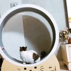 This is adorable! Getting kitty on the treadmill with a laser pointer! This is adorable! Getting kitty on the treadmill with a laser pointer! Cute Funny Animals, Cute Cats, Funny Cats, Adorable Kittens, Diy Funny, Video Chat, Cat Room, Pet Furniture, Funny Cat Videos