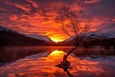 Fire in the sky! The lone tree in Llyn Padarn and a spectacular fiery sky at sunrise!