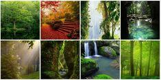 A Garden World