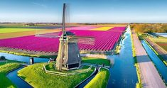 Is in 't Zand Holland  Phenomenal dronephotography by @kareltonphotogragraphy . I was looking very close if KT had captured me because this place is my second home. Those purple tulips I will publish today with this amazing mill and video on my personal account. Great angle and wonderful composition  outstanding work Karel Ton   Congratulations  Artist: @kareltonphotogragraphy Location: 't Zand #gw_kareltonphotogragraphy   Please visit his wonderful gallery  Use #Global_Windmills for your…
