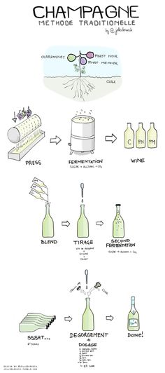 How Champagne is made. | 17 Diagrams To Help You Get Turnt