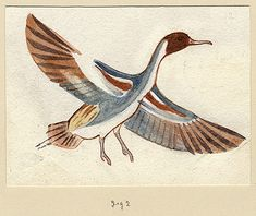 Carter MSS. vii.1.7.2 watercolour, 11.3 by 8.2 cm Location and dating: not known Previous reproductions: Malek, J. The Treasures of Tutankhamun (2006), fig. on 25 [enclosure TUT.25.08_A http://www.griffith.ox.ac.uk/gri/Carter_birds.html