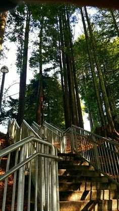 Favorite walk on campus- Humboldt State University in Arcata, CA