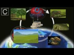 This professionally produced and narrated video describes the carbon cycle and why it is important, including an explanation of the Greenhouse Effect. It was...