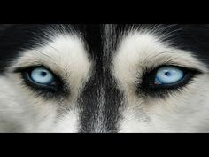 DIVINE CANINES. Are Dogs Sent From Heaven To Assist Humanity? A Film For...