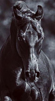 Such a beautiful Black Horse