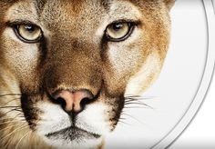 Fifteen tips and tricks for OS X Mountain Lion you need to know. http://cnet.co/MjOQkT
