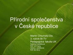 LESNÍ PATRA Praha, Plant Leaves, Plants, Plant, Planets