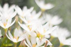 FLOWERS MACROPHOTOGRAPHY