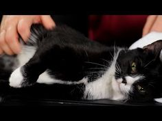 """The """"Learn How To Pet A Cat Properly"""" and """"Train a Cat To Enjoy Cuddles"""" Bible - http://www.catnipdaily.com/the-learn-how-to-pet-a-cat-properly-and-train-a-cat-to-enjoy-cuddles-bible/"""