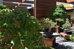Bonsai garden l National Arboretum Canberra