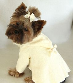 This little Yorkie is sporting a Vanilla Milkshake Robe.  #puppied