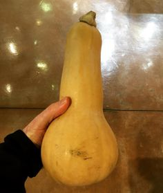 I only had to bike to three different grocery stores around  Davis to find this huge squash for Kate's recipe.