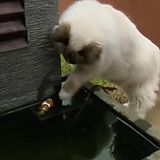 Cat helps out his fishy friend - Imgur