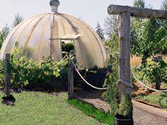 Biodome Veggie Garden
