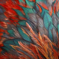Turquoise & Orange feathers...yes please! :)