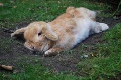 Sweet Dreams little Bunny