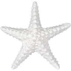 White Starfish Figurine ($9.99) ❤ liked on Polyvore featuring home, home decor, filler, outdoor figurines, outdoor home decor, coastal home decor, ceramic figurines and ceramic home decor