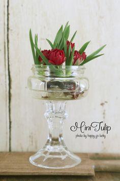 かわいいミニチューリップ|Enjoy the Little Things