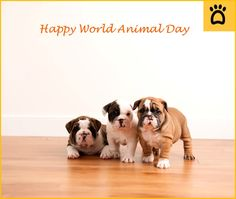 #WorldAnimalDay❤️🐶 The Kindness one does for an animal  may not change the world but, it will change the world for that one animal…To know all about us log on to: www.myposhpetz.com #pet #pets #petstagram #petsofinstagram #petofig #petit #petlove #petcare #love #care #cute #adorable #pup #puppies #dog #dogs #dogstagram #dogsofinstagram #cat #cats #catstagram #kitty #kitten #catty #meow #rabbit #bunny #horse #fish #birds #animals #delight_pets #weeklyfluff