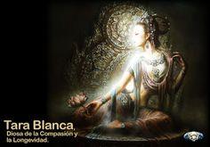 Presente Consciente: Felíz Domingo para todos