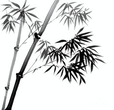 Chinese Ink Painting Of Bamboo Drawing  - Chinese Ink Painting Of Bamboo Fine Art Print