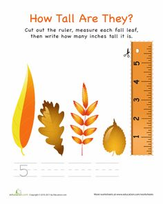Leaves are dancing, temperatures are dropping . fall has arrived! Celebrate the seasonal shift with our best autumn worksheets. From DIY decorations to crossword puzzles, this printable collection offers something for every kind of kid. Back To School Worksheets, 1st Grade Worksheets, Free Printable Worksheets, Printables, Autumn Activities For Kids, Science Activities, Classroom Activities, Classroom Ideas, First Grade Measurement