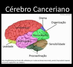 Cerebro Canceriano