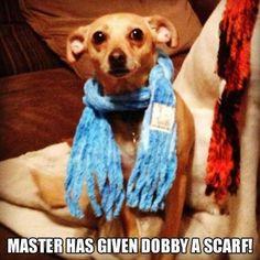 Dobby dog
