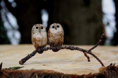two owls by Joe lawrence art work, via Flickr