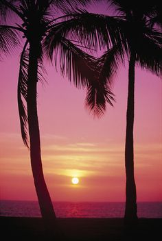 Carl Shaneff Solid-Faced Canvas Print Wall Art Print entitled Hawaii, Oahu, Waianae Coast, View Of Sunset Between Two Palm Trees Beautiful Sunset, Beautiful Beaches, Beautiful World, Cool Pictures, Beautiful Pictures, Palm Tree Sunset, Palm Trees Beach, Quelques Photos, Oahu