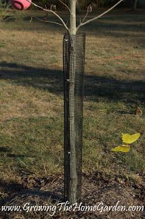How I Protect Trees From Deer Rubbing Damage Growing The Home Garden