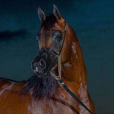 Horse Portrait, Horses, Animals, Horse, Animales, Animaux, Animal, Animais