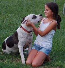 Fanta is an adoptable Pit Bull Terrier Dog in Middletown, CT. Meet the Fantastic, Fabulous FANTA! She is just about a s good as it gets for a family dog. As you can see she absolutely adores children ...