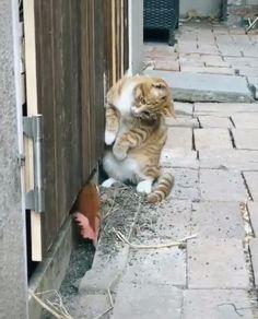 Cute Little Animals, Cute Funny Animals, Cute Cats, Funny Cats, Funny Cat Videos, Cute Animal Videos, Funny Animal Pictures, Cute Creatures, Animal Memes
