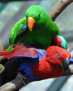 Parrot, Bird, The World, Exotic Birds, Animales, Couples, Tips, Spring, Parrot Bird