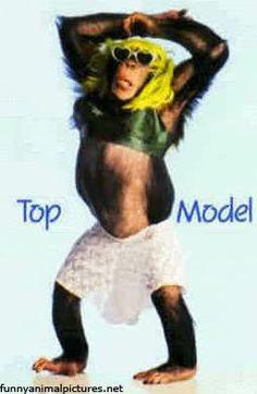 America's Next Top Model Funny Monkey Pictures, Funny Animal Photos, Animal Pictures, Funny Animals, Cute Animals, Tech Humor, America's Next Top Model, Baboon, Orangutan