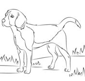 beagle dog coloring page puppy coloring pages adult coloring pages coloring books beagle