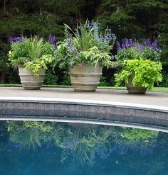 Florals and evergreens in large pots really dress up the landscape around this pool.