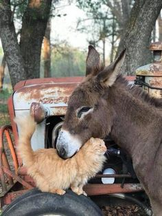 Cute Cat Quotes That Will Touch Your Heart Deeply Farm Animals, Animals And Pets, Funny Animals, Cute Animals, Happy Animals, Wild Animals, Photo Animaliere, Photo Chat, Cute Donkey