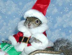 Sugar Bush Squirrel in Santa's Sleigh  www.SugarBushSquirrel.com