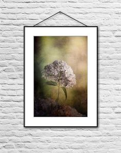 Flower photography print, floral wall art, floral art print, hydrangea photo, painterly wall decor, flower picture, white, green, yellow