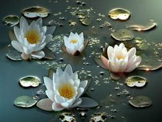 Find images and videos about white, flowers and lotus on We Heart It - the app to get lost in what you love. List Of Flowers, Beautiful Bouquet Of Flowers, Water Lily Tattoos, Danube Delta, Water Flowers, Lotus Flowers, Flower Wallpaper, Flower Power, Planting Flowers