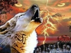 Friendly wolf community for all wolf lovers out there. Wolf Spirit, Spirit Animal, Native American Wolf, Wolf Totem, Wolf Pup, Wolf Wallpaper, Wolf Pictures, Wolf Howling, White Wolf