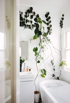 my scandinavian home: Bathroom with a climbing plant.